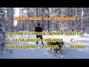 Профессиональная охота в Западной Сибири с гибридом волка и лайки Казис Буошка