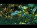 Kaplanlar ormandaki casuslar
