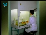 Биотехнологии. Урок 1. Волшебные грибы