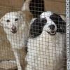 Приют для животных в городе Гусь-Хрустальный