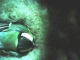 Синица кормит птенцов 2