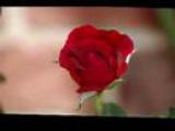 Nana Mouskouri   THE ROSE