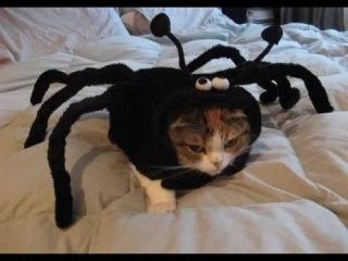 Страшилки приколюшки над людьми, пытка пауком!