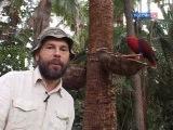 Заметки натуралиста, Парк попугаев ( Loro Parque ), Тенерифе