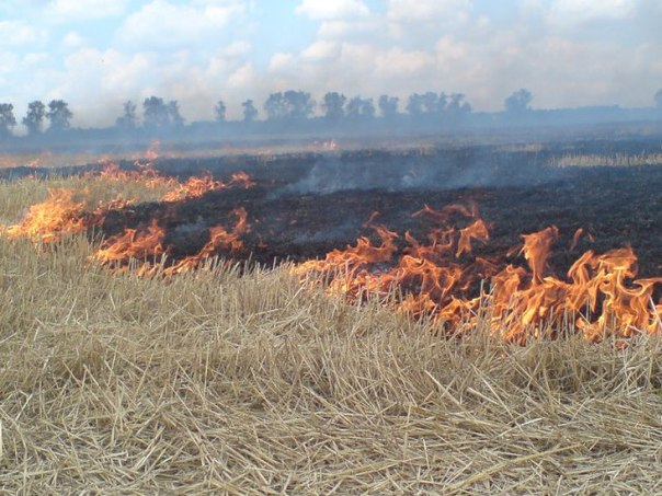 Зачем сжигают траву на полях?