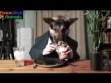 Смешная подборка про кошек и собак 2014.3gp