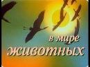 В мире животных с Николаем Дроздовым. Выпуск №56
