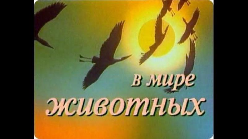 В мире животных с Николаем Дроздовым Выпуск №56