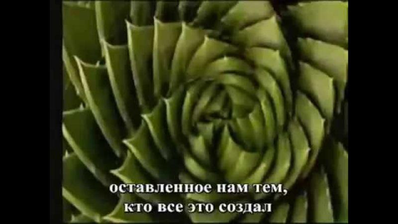 Числа Фибоначчи — Отпечаток Бога