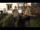 Планета собак Бельгийская овчарка -Грюнендаль -