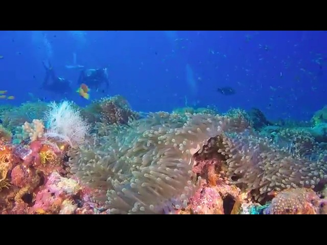 Diving on Maldives (Madi Miyaru Thila)