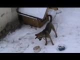Угадай за чем бегал пёс за первую минуту просмотра