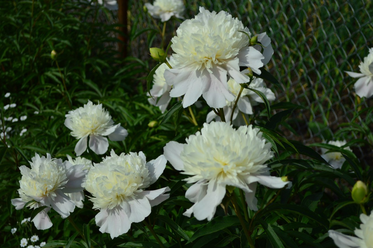 Розсада садових рослинок. B6F2mGSRSTs