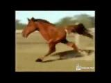 Бегущая лошадь (смейся до слёз)