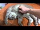 Смешные видео про кошек - с добрым утром котик