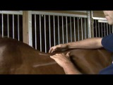 Saddle Fitting in 9 Steps - Step 3 - Gullet Channel Width - by Schleese Saddlery Service