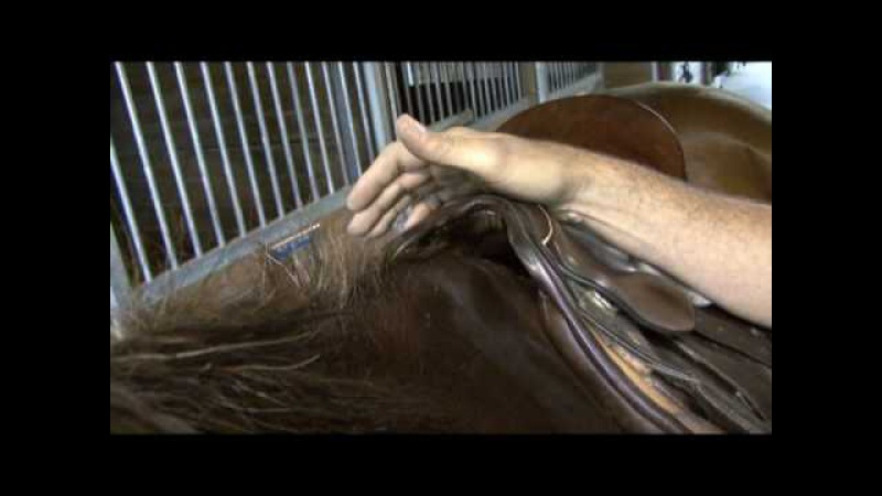 Saddle Fitting in 9 Steps - Step 9 - Saddle Tree Width - by Schleese Saddlery Service