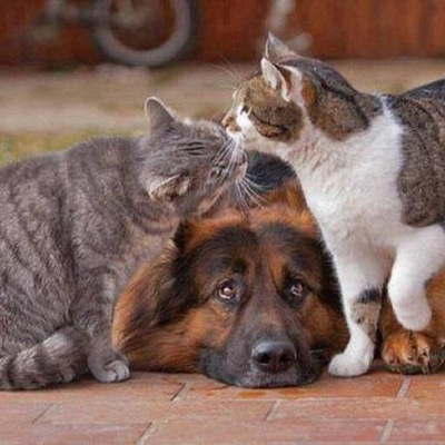 technicalities of dogs and cats If these cat tweets will not make you laugh, nothing will.