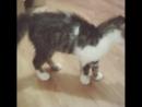 неугомонный кот Том