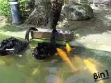 Лебеди в пруду кормят рыбу (карпы кои) / black swan feeding koi fish