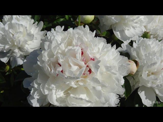 Фоамиран цветок мастер класс