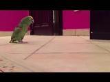 ПРИКОЛ - Зловещй смех попугая