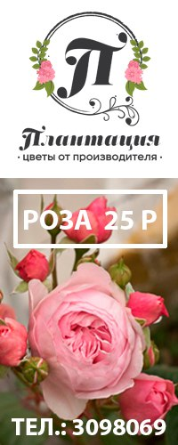 Заказ цветов от производителя доставка цветов в белебей