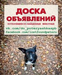 Пропавшие животные подать объявление отделка квартир подать объявление нижний новгород