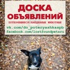 Потерявшиеся|найденные животные Доска Объявлений