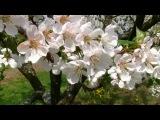 С. Рахманинов  Рапсодия - S. Rachmaninoff's Rhapsody on a Theme of Paganini