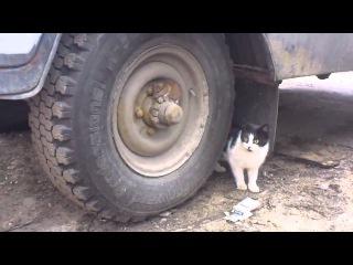 Том и Джерри русская беспощадная версия Tired of playing cat and mouse