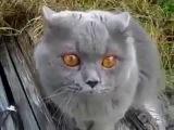 Говорящий кот ругается матом и спорит с хозяином
