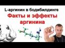 L - Аргинин в бодибилдинге. Факты и эффекты l аргинина, как принимать l arginine