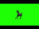 green screen horse