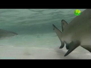 BBC «Уникальные способности животных (3). Обоняние» (Документальный, 2014)