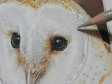 Painting a Day Demonstration-Barn Owl by Roberta
