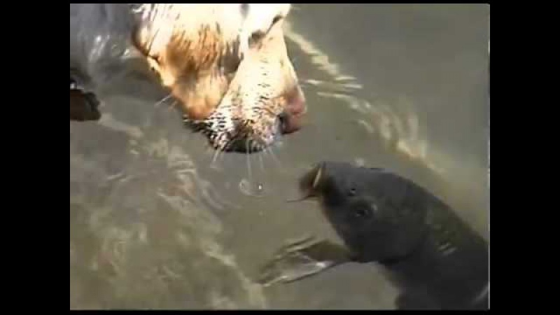 Собака и рыба