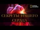 Секреты нашего сердца National Geographic HD