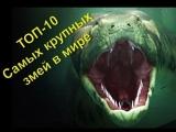 ТОП 10 Самые большие змеи в мире. Интересные факты