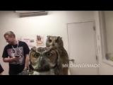 Реакция сов на камеру - http://vk.com/sasisa_ru
