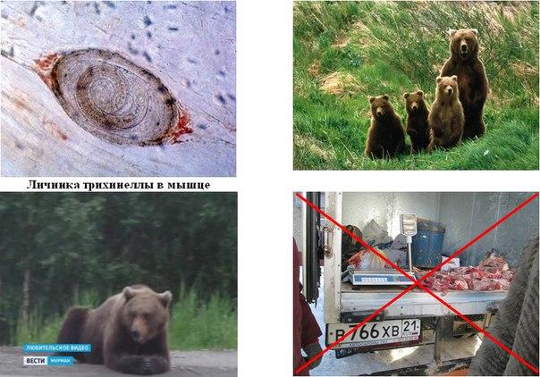 медвежья болезнь симптомы лечение родами