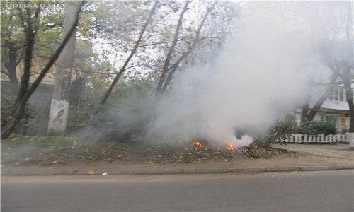 Власти Армянска призвали жителей города не сжигать листья