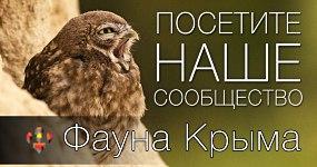 Фауна Крыма