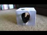 5 полезных советов для тех у кого дома есть котейка