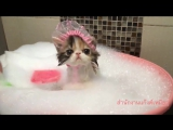 Котик в ванне