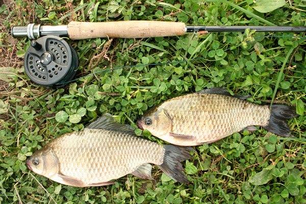 ловля рыбы на поверхностные приманки