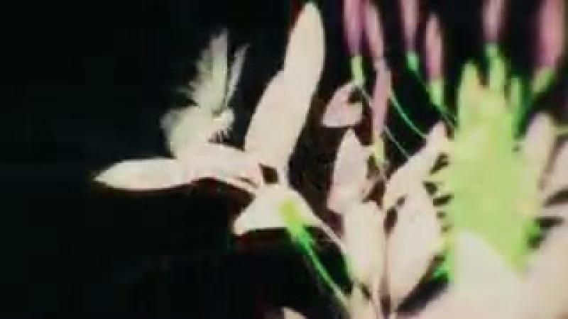 клип мастера меча онлайн корона вины стрелок с черной горы