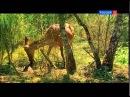 Звериные нежности или Один день в лесу