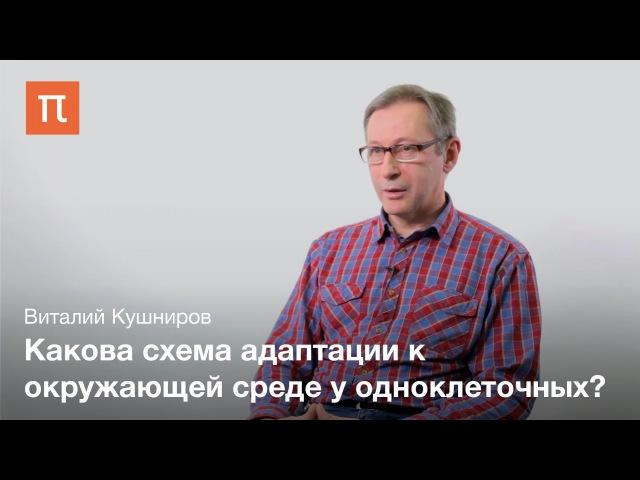 Полезные прионы и амилоиды - Виталий Кушниров
