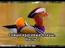10 самых необычных птиц о которых вы возможно не слышали Часть 1